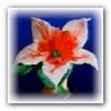Цветок из шерсти нарцисс